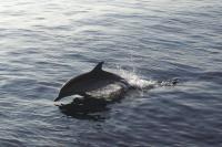 c'est trop mimi les dauphins